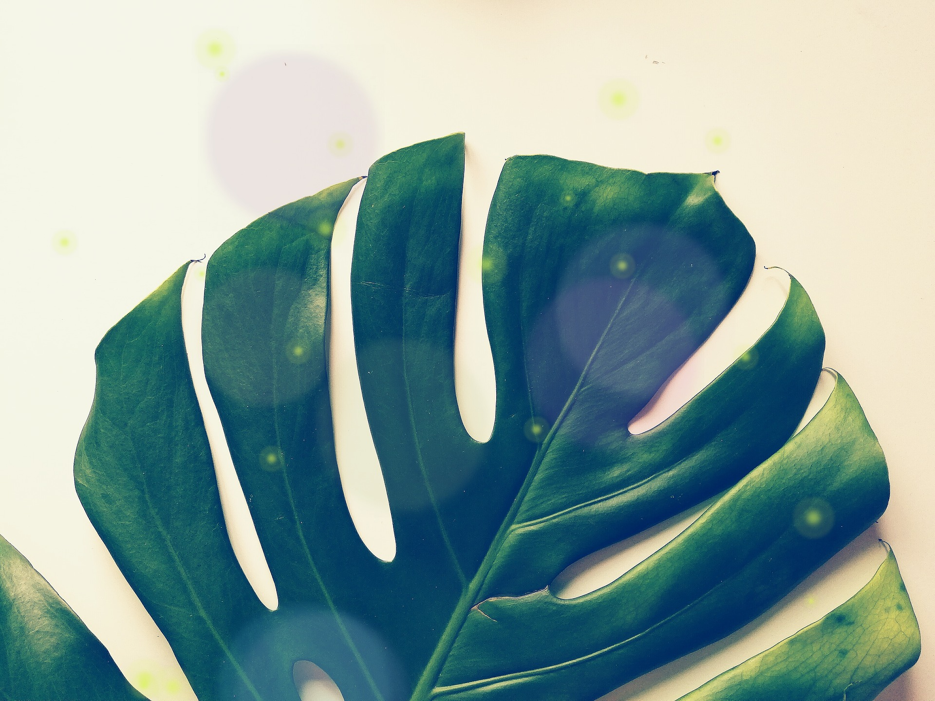 Velký list rostliny